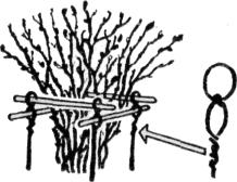 Ограждение для кустов смородины своими руками фото